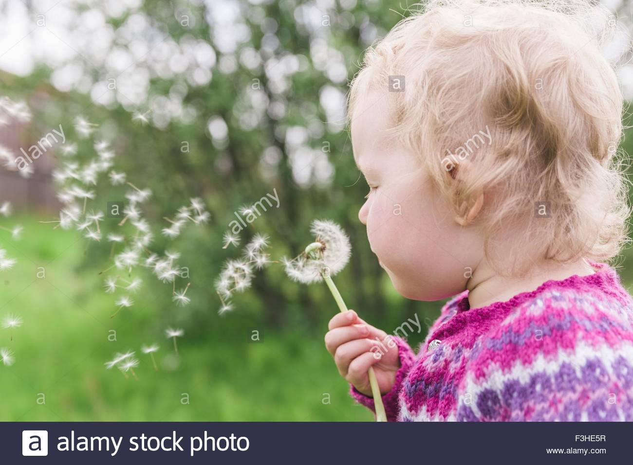 Young girl blowing dandelion clock - Stock Image