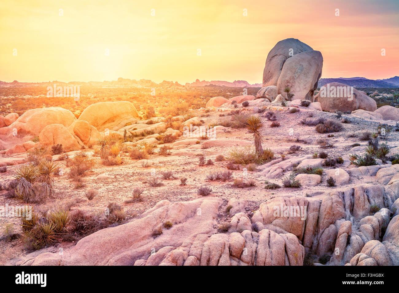 Sunset over desert in Joshua Tree National Park, California, USA. - Stock Image