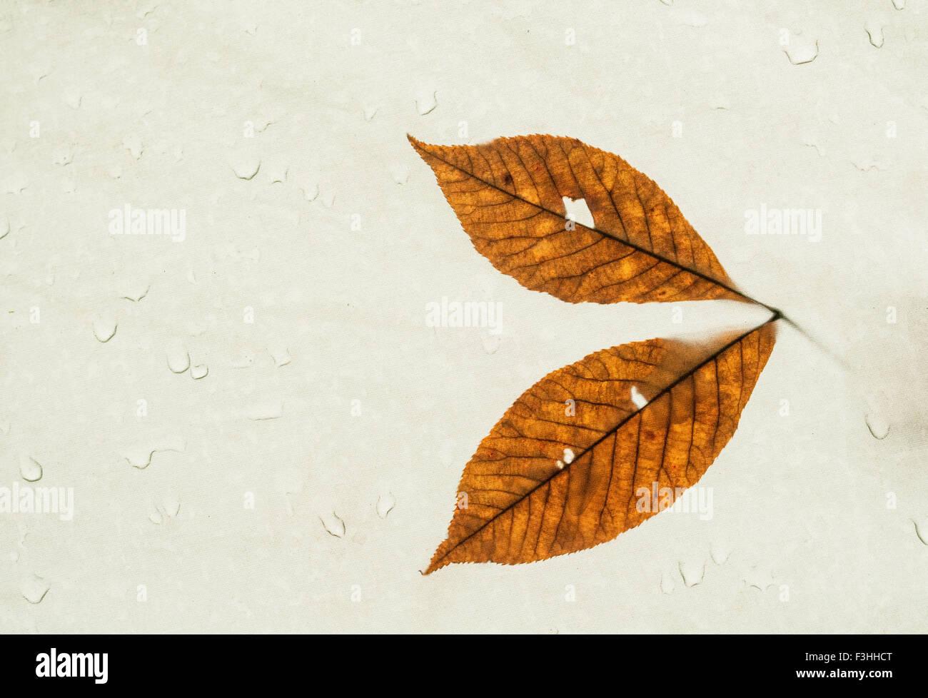 Autumn leaves photographed through a rain soaked nylon tarp over a campsite Stock Photo