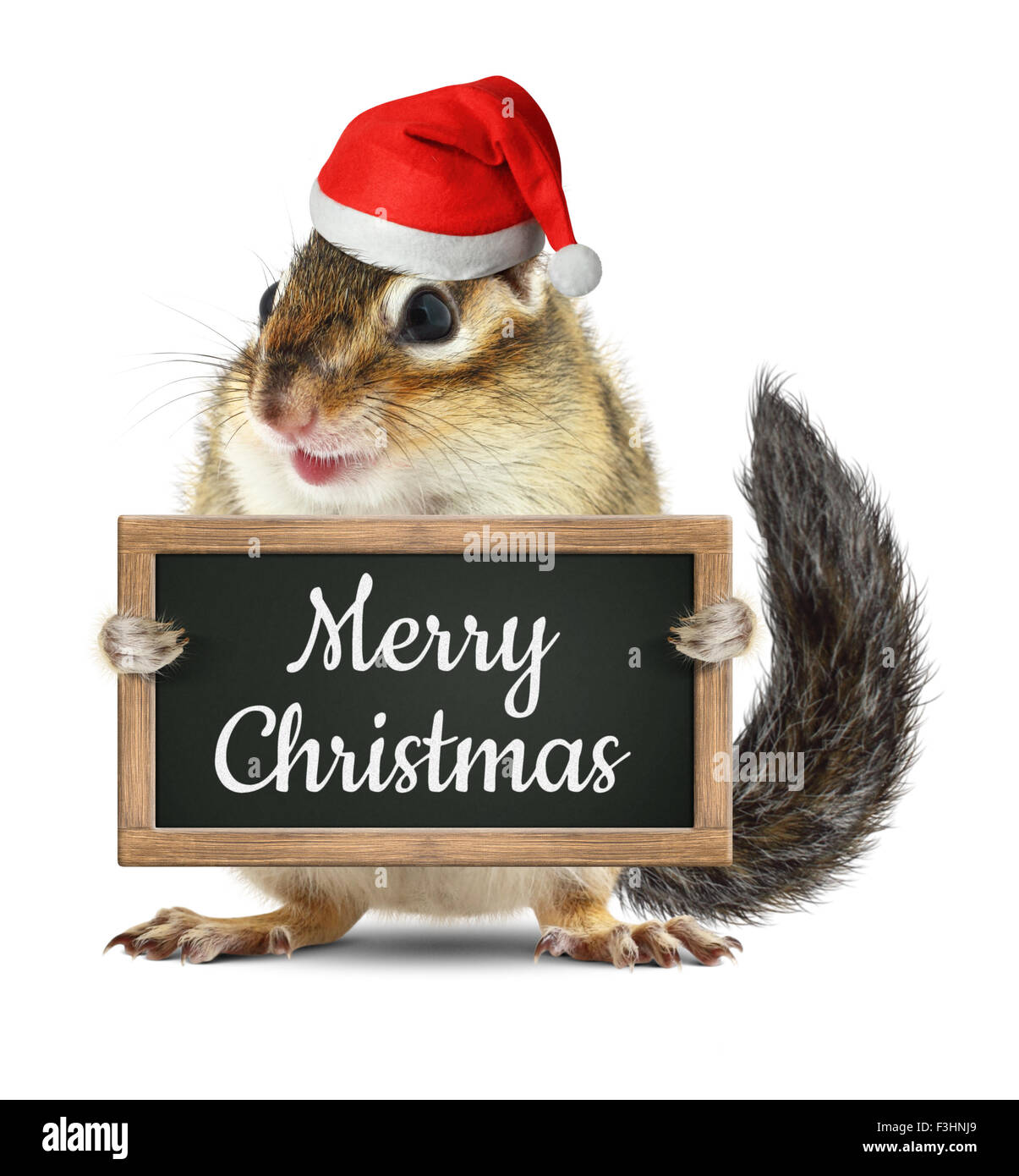 Funny santa claus, squirrel hold blackboard with merry christmas ...