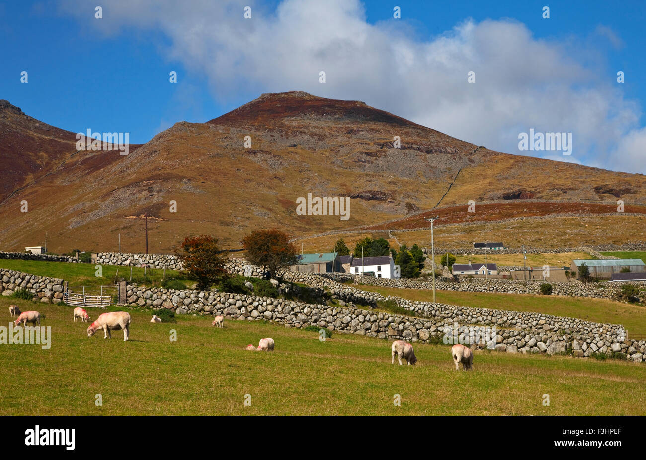 Farmland, Stone Walls in the midste of the Mountains of Mourne, Near Kilkeel on the Silent Valley Road, County Down, - Stock Image