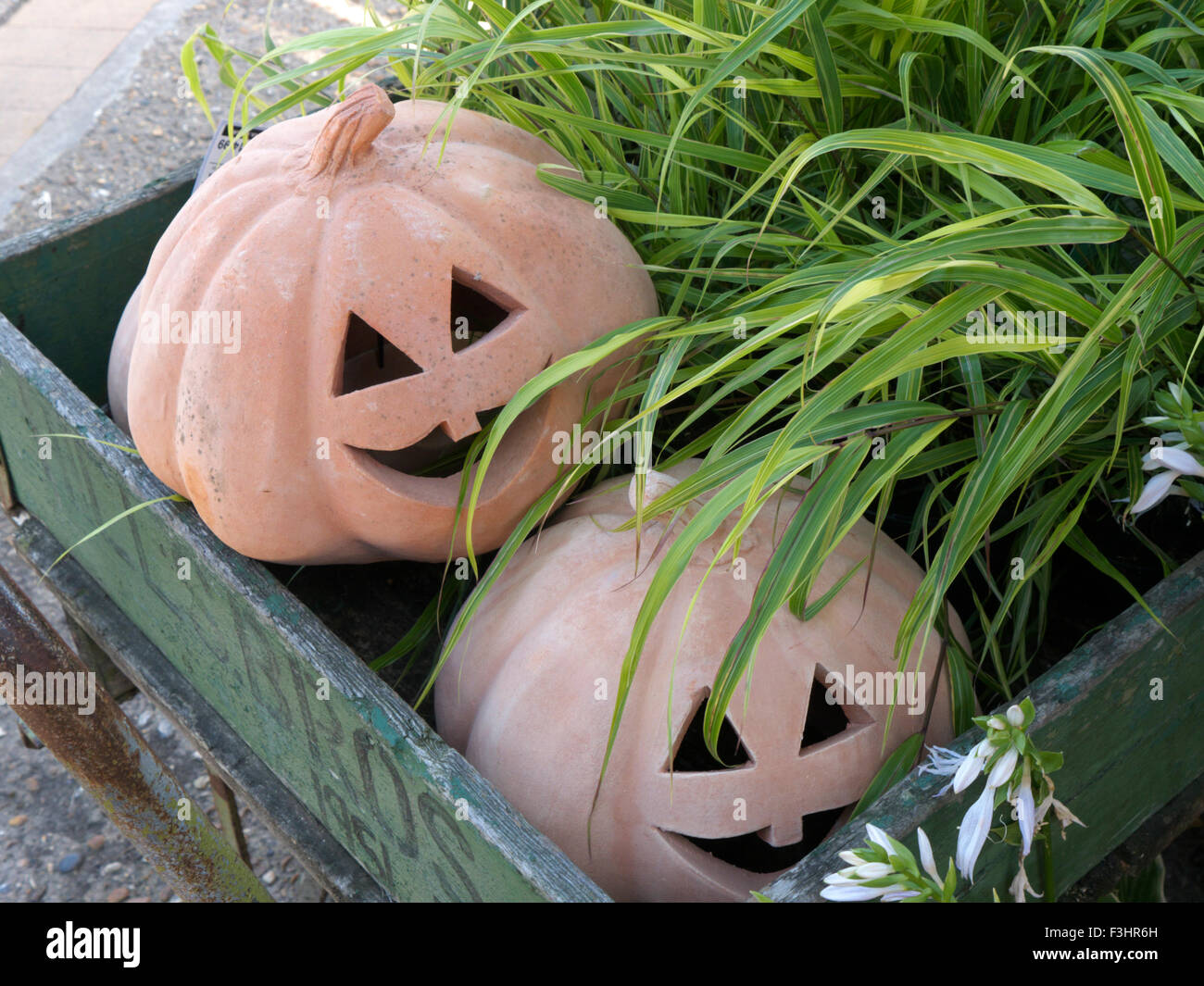 Halloween model pumpkins 'jack-o'-lantern' carved pumpkin, associated with the holiday of Halloween - Stock Image