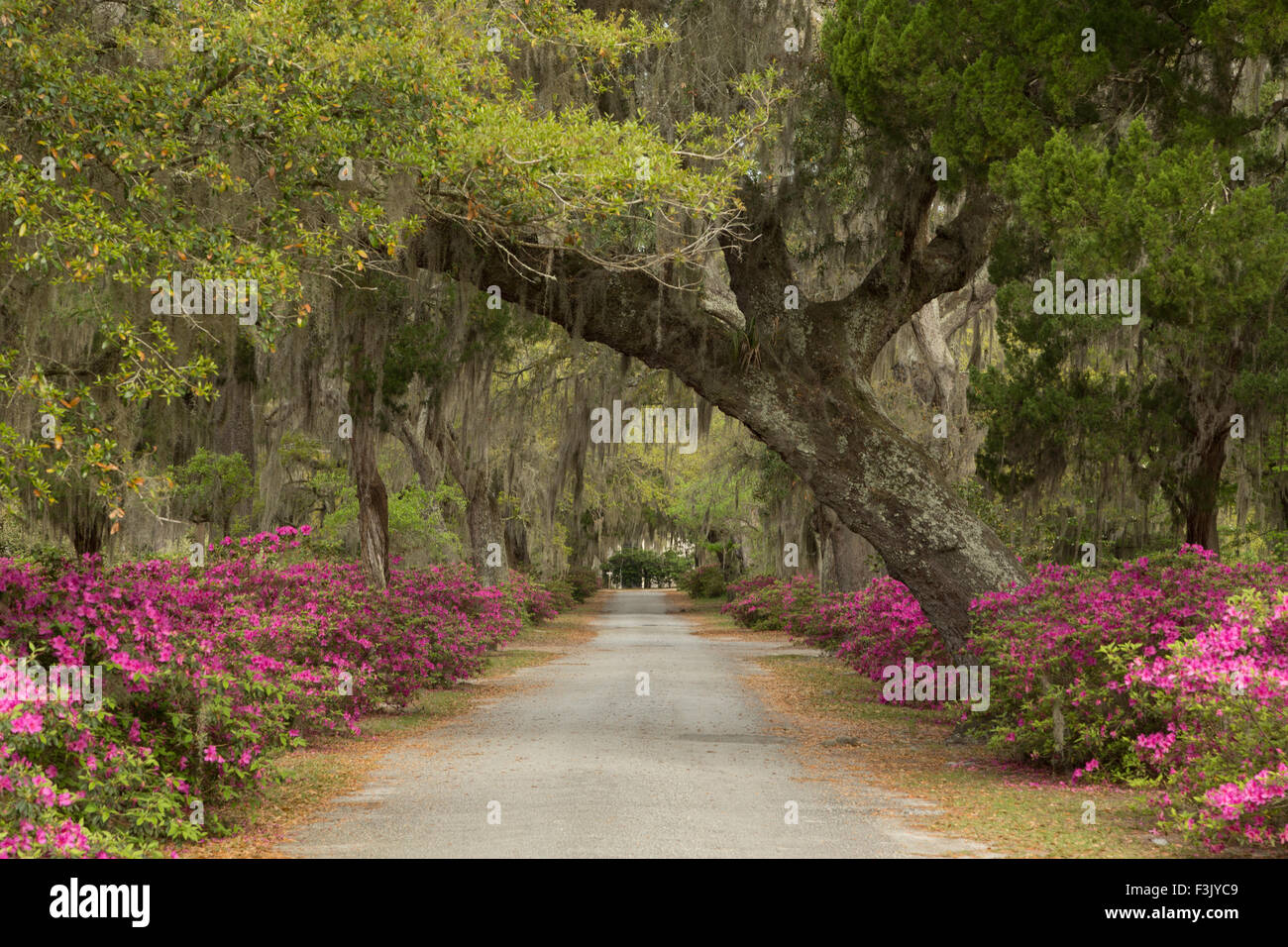 A colorful photograph of Bonaventure Cemetery in Savannah, Georgia ...