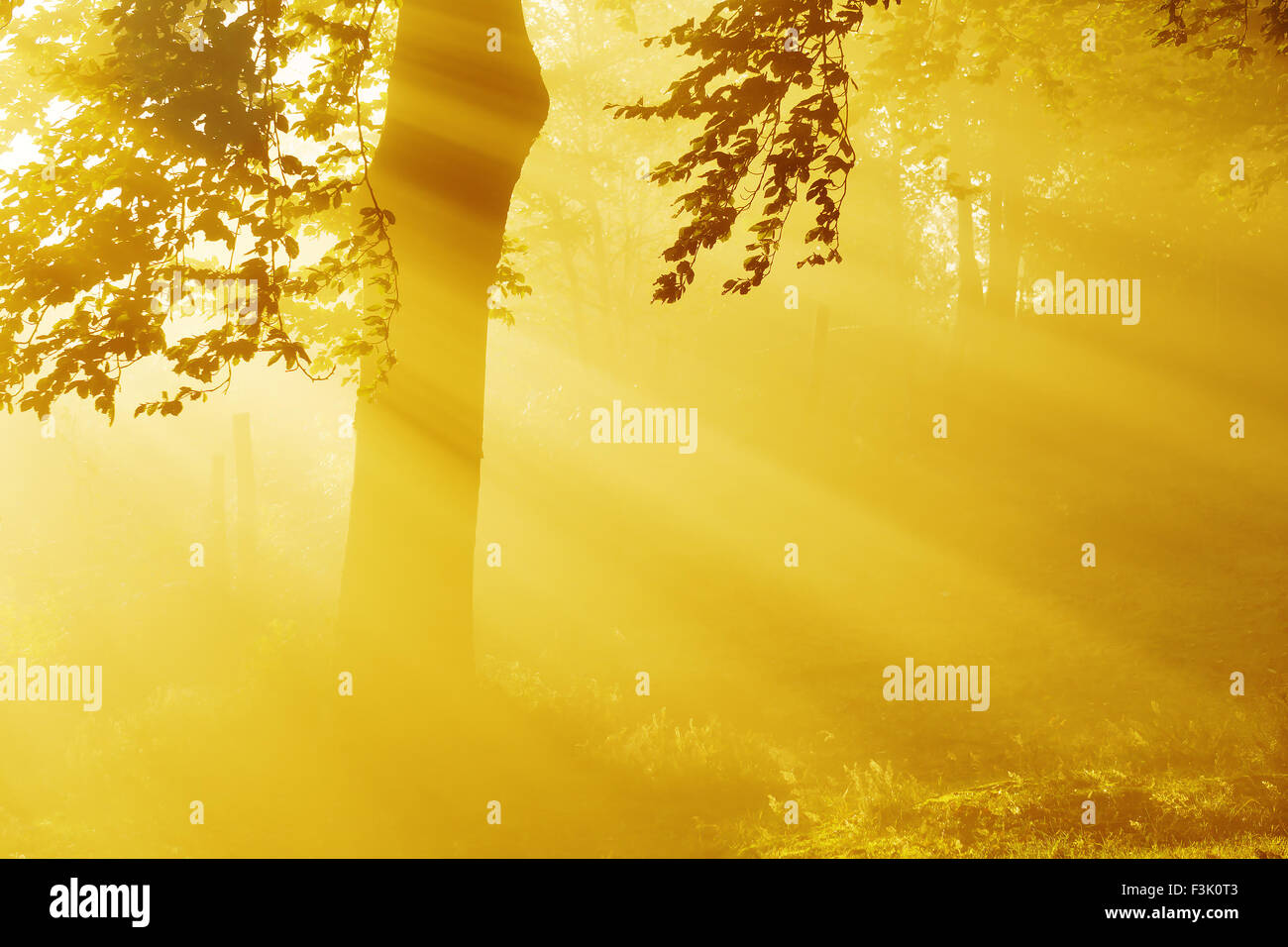 sunrise sun rays in the forest - Stock Image