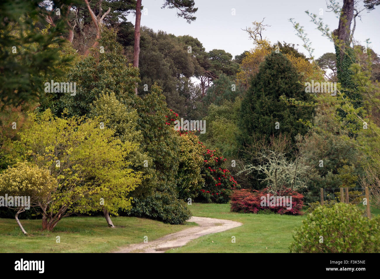 Tregothnan Estate gardens, Cornwall, famous for its camellias and ...