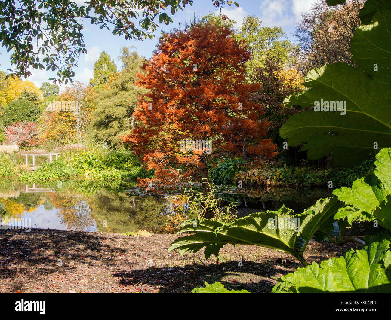 Hillier Gardens And Arboretum Stock Photos & Hillier Gardens And ...