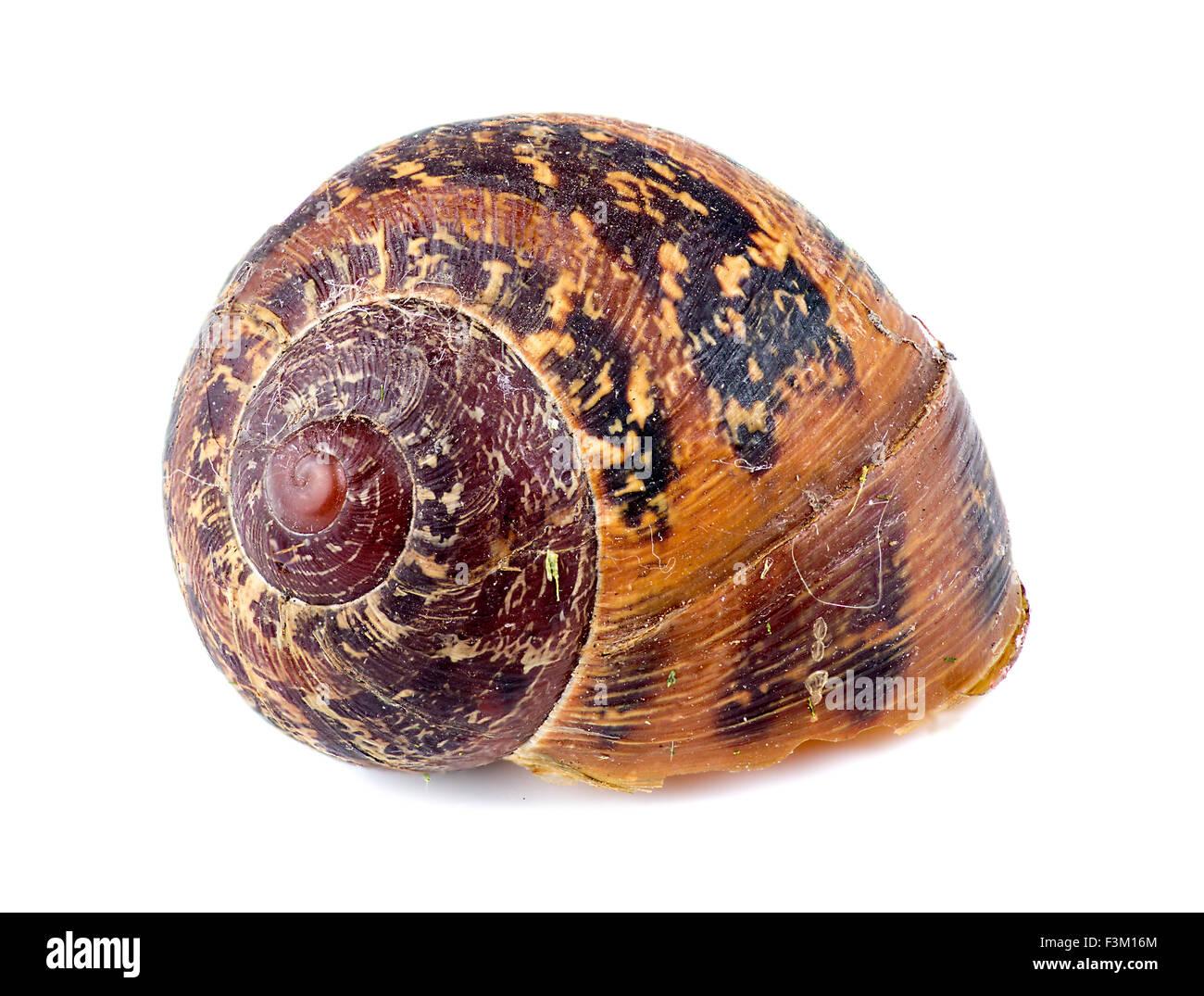Macro of beautiful abandoned snail shell - Stock Image