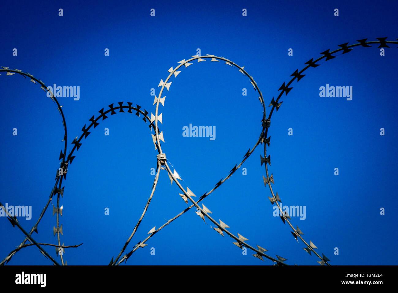 Coils of razor wire. Stock Photo