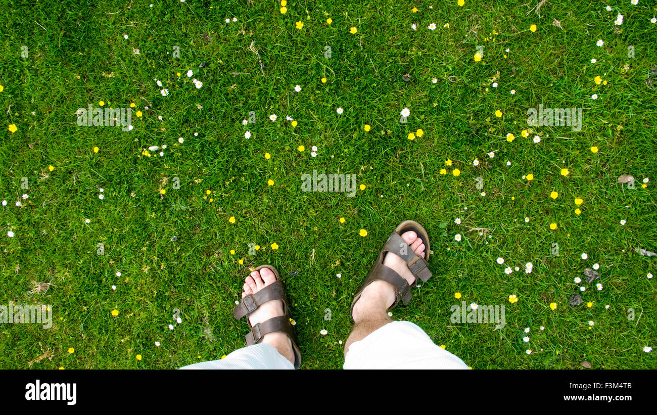 photographers feet in sandals in field of buttercups and daisies - Stock Image