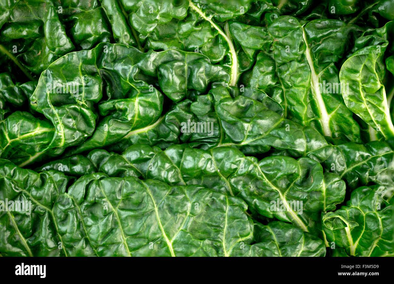 Macro closeup of healthy green fresh silverbeet - Stock Image