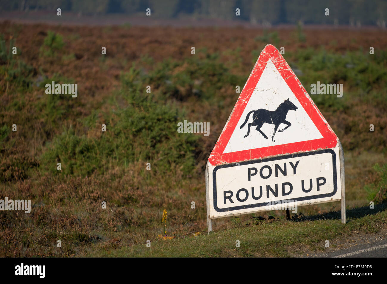 Pony round up caution road sign in the New Forest Hampshire UK - Stock Image