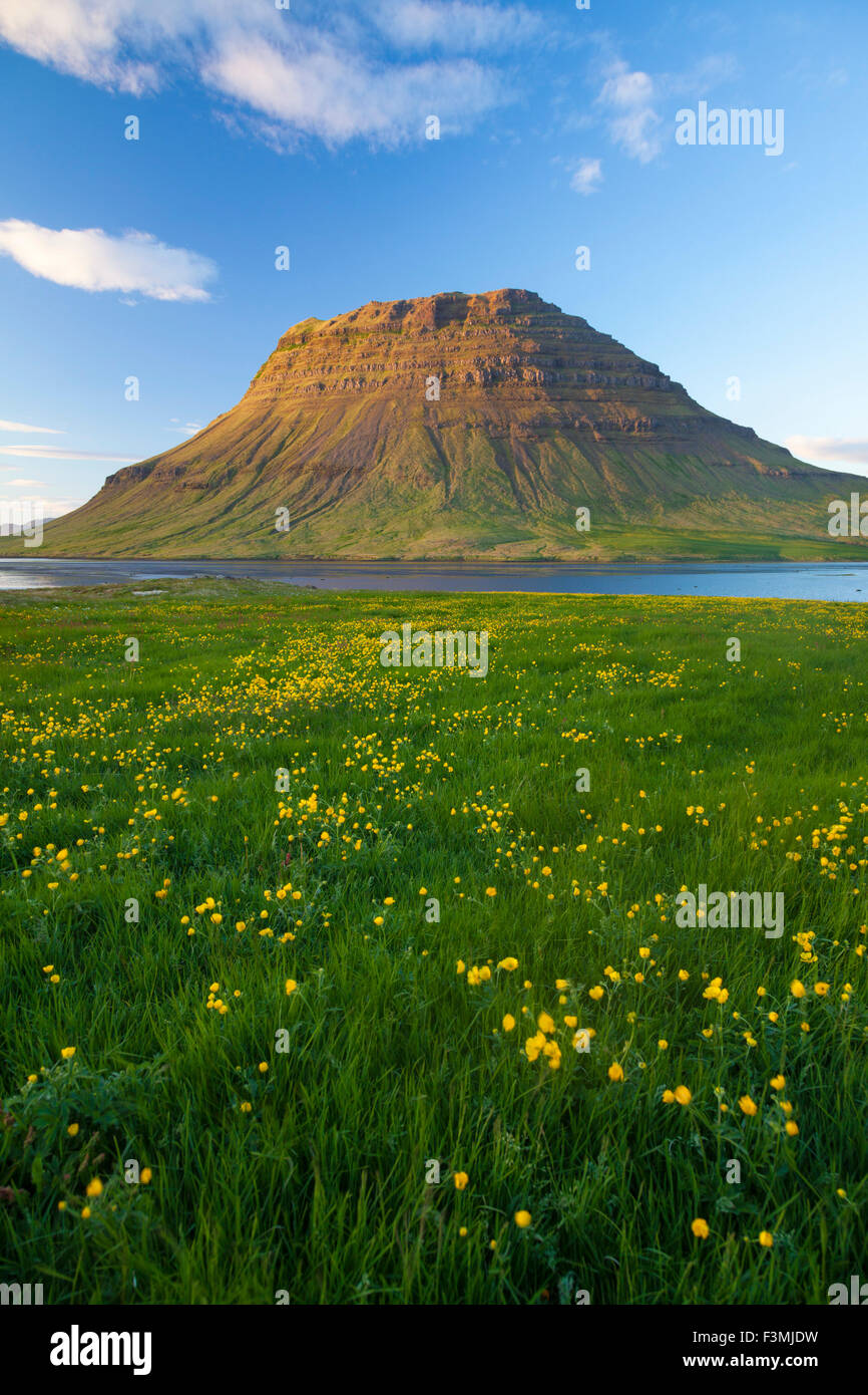 Buttercup meadow and Kirkjufell mountain, Grundarfjordur, Snaefellsnes Peninsula, Vesturland, Iceland. - Stock Image
