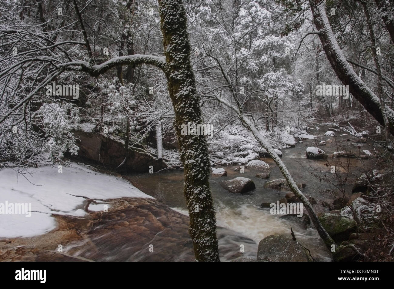 A winter snow storm adds to the beauty of Berry Creek as it flows into Lake Madrone in the Sierra foothills of Northern - Stock Image