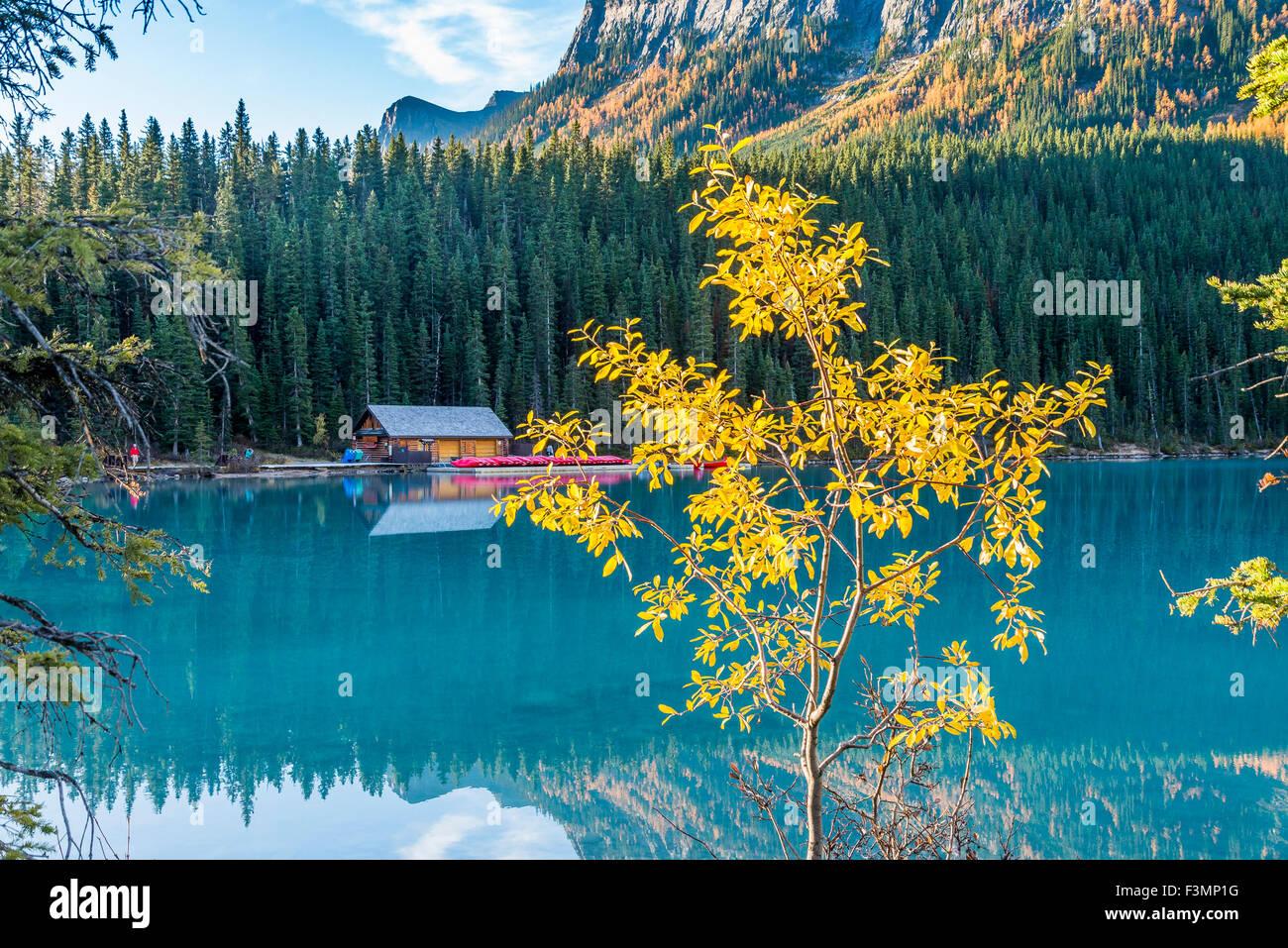 Fall colour, Lake Louise, Banff National Park, Alberta, Canada, - Stock Image