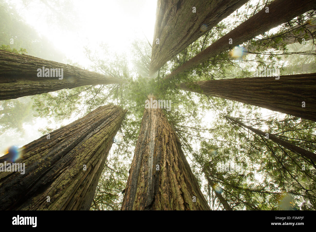 Coast and Redwoods, Northern California - Stock Image