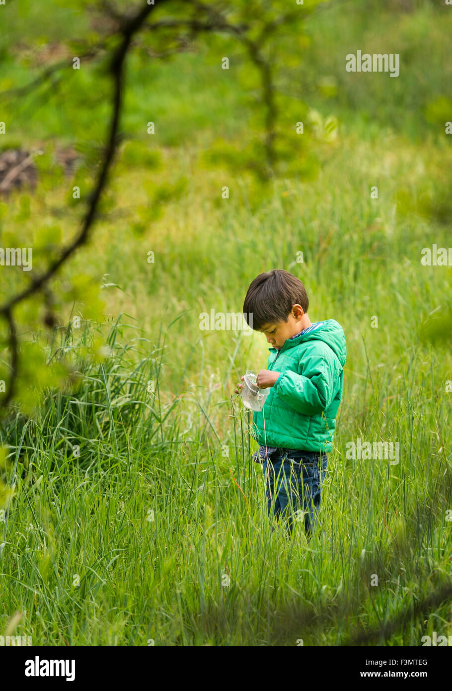 Young Asian boy collects insects in tall grass - Stock Image