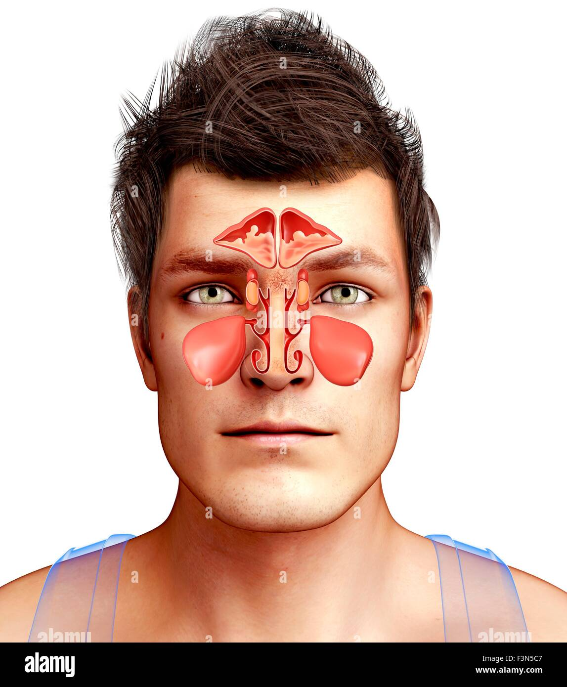 Nose And Anatomy And 3d Stock Photos & Nose And Anatomy And 3d Stock ...