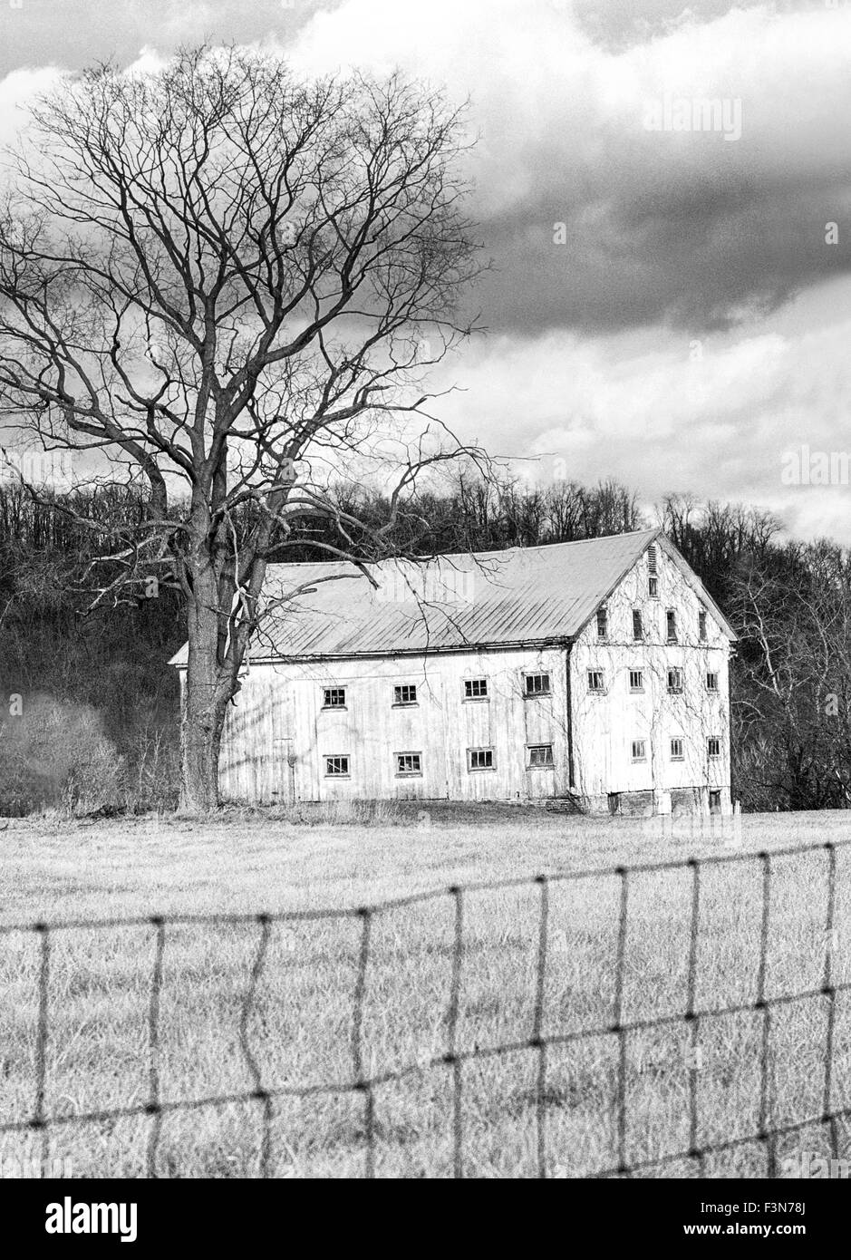 black and white version of old antique wooden barn with lots of windows in the country with an old tree and  wire - Stock Image