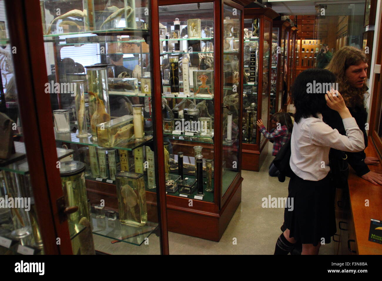 A man and woman peruse zoological exhibits inside the Alfred Denny Museum at the University of Sheffield, Yorkshire - Stock Image