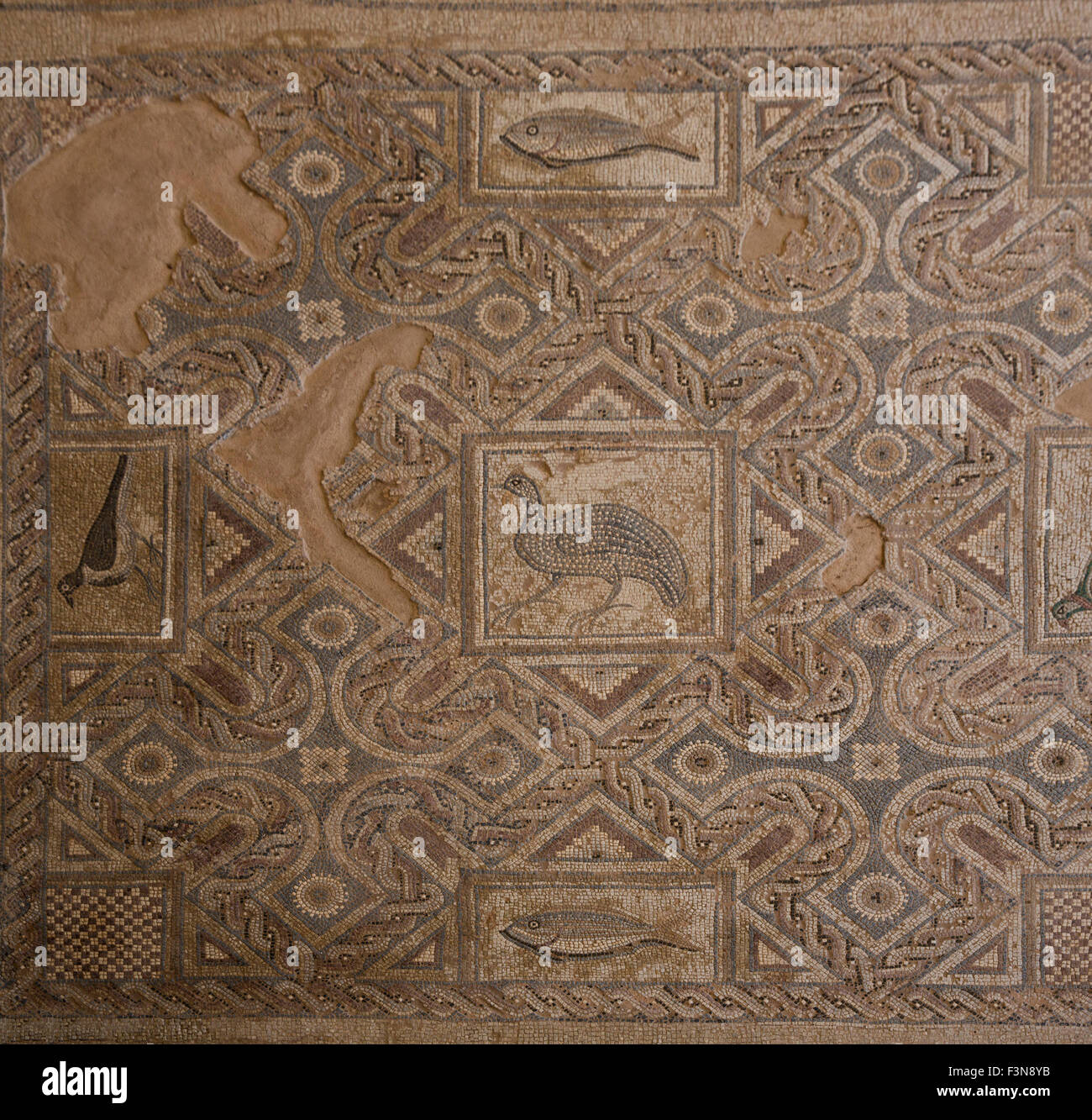 Mosaic floor in the church in the Roman town of Curium (modern Kourion) in Cyprus Stock Photo