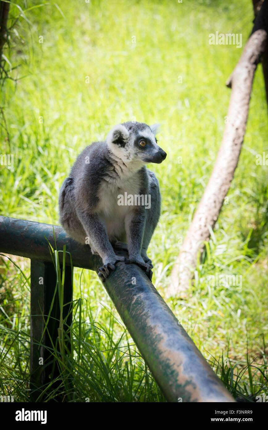 Haifa Zoo, Israel Stock Photo