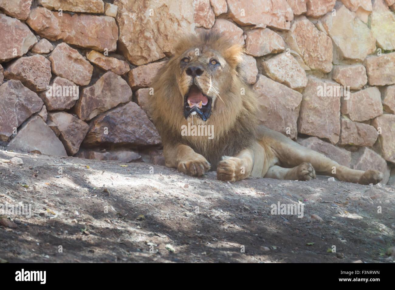Haifa Zoo, Israel - Stock Image