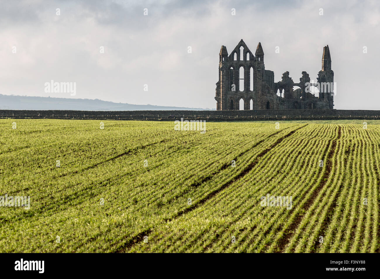 Whitby Abbey from beyond the crop field Stock Photo