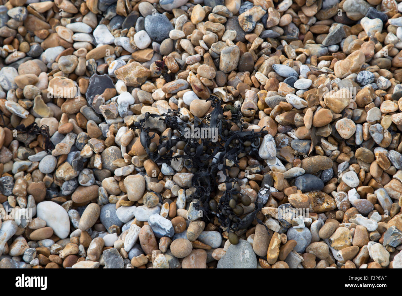 Black seaweed on beach stones - Stock Image