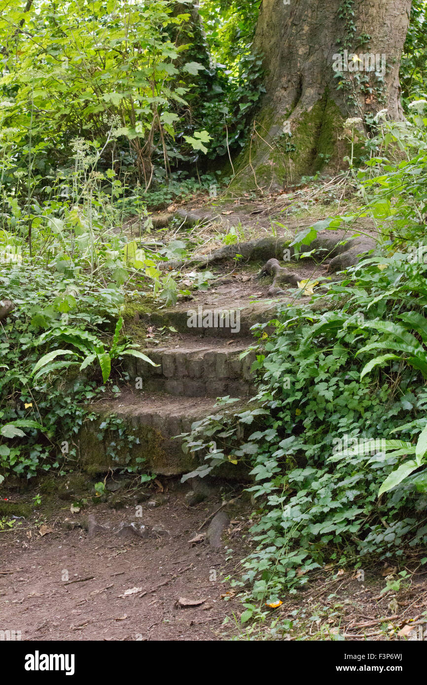 Scenic view of over grown old brick steps in a wood - Stock Image