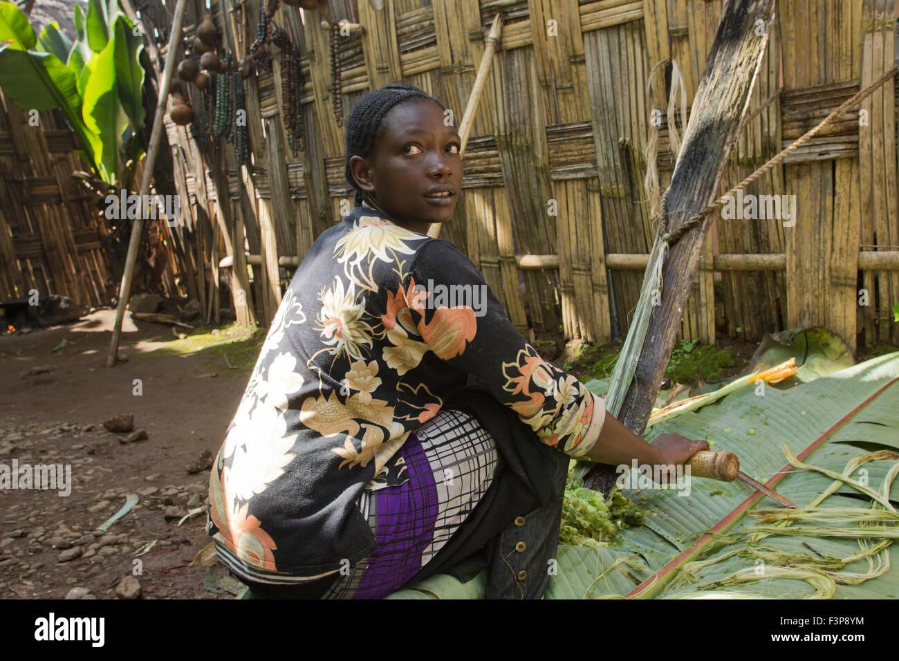 Africa, Ethiopia, Omo region, Chencha, Dorze village shaving a leaf of the fruitless Banana. These shavings are - Stock Image