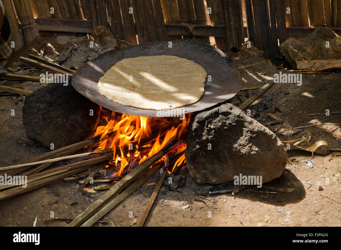 Africa, Ethiopia, Omo region, Chencha, Dorze village. Woman prepares bread from the shaving a leaf of the fruitless Stock Photo