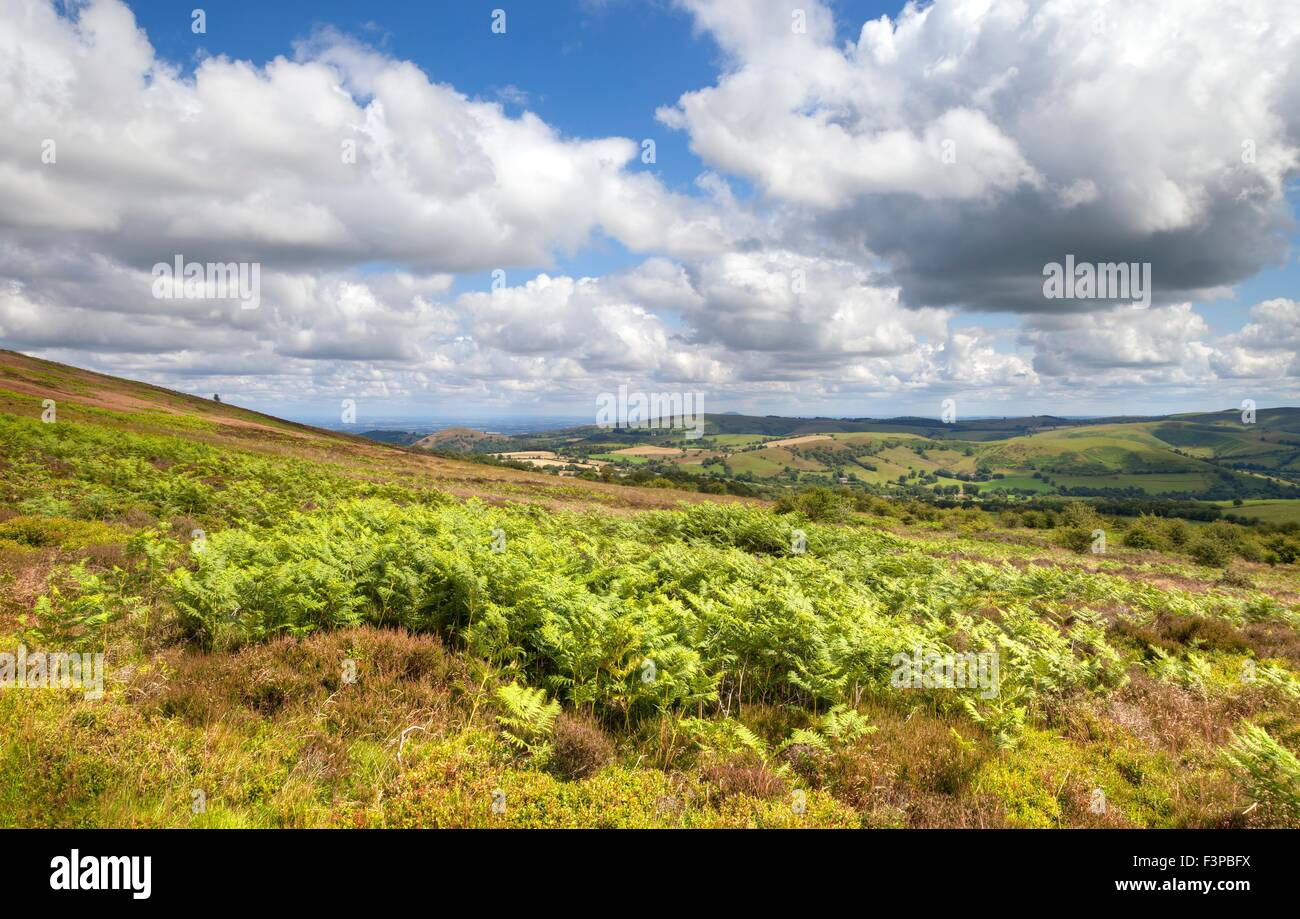 Bracken and heather, Shropshire, England. - Stock Image