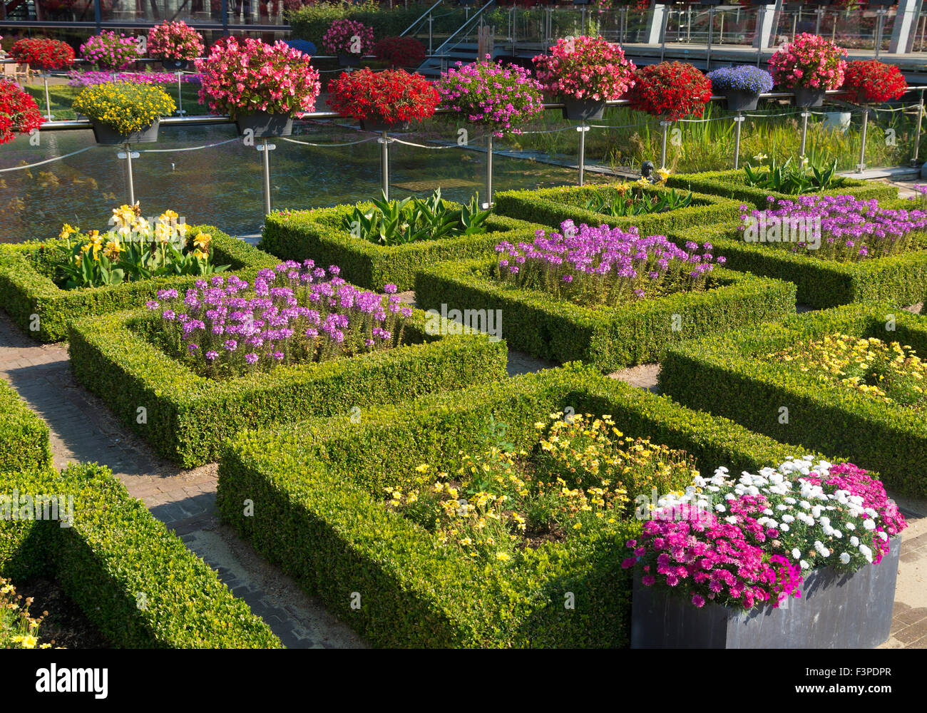 blooming flowers in a beautiful garden with square cut hedges - Stock Image