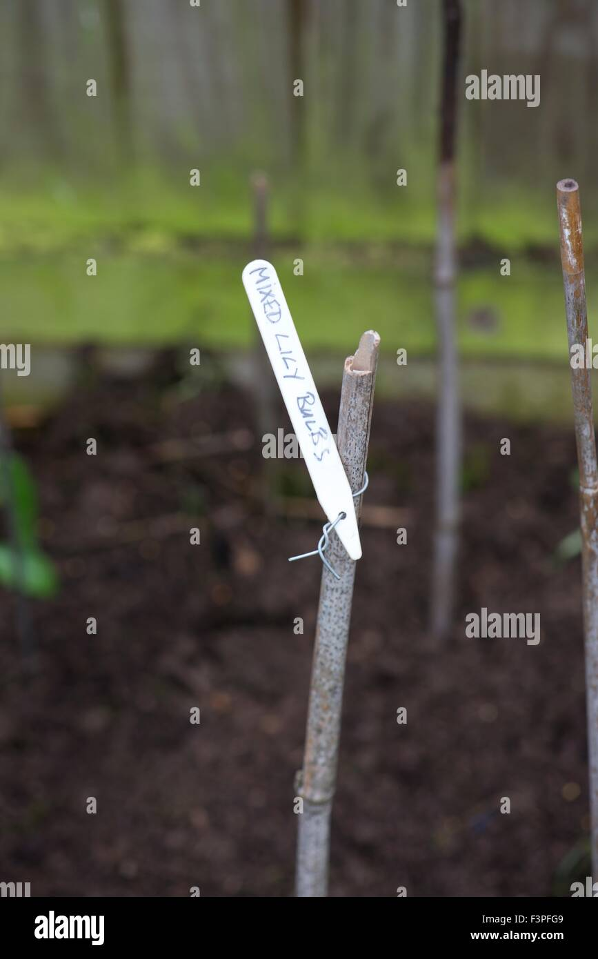 Plastic plant label tied to cane with wire. - Stock Image