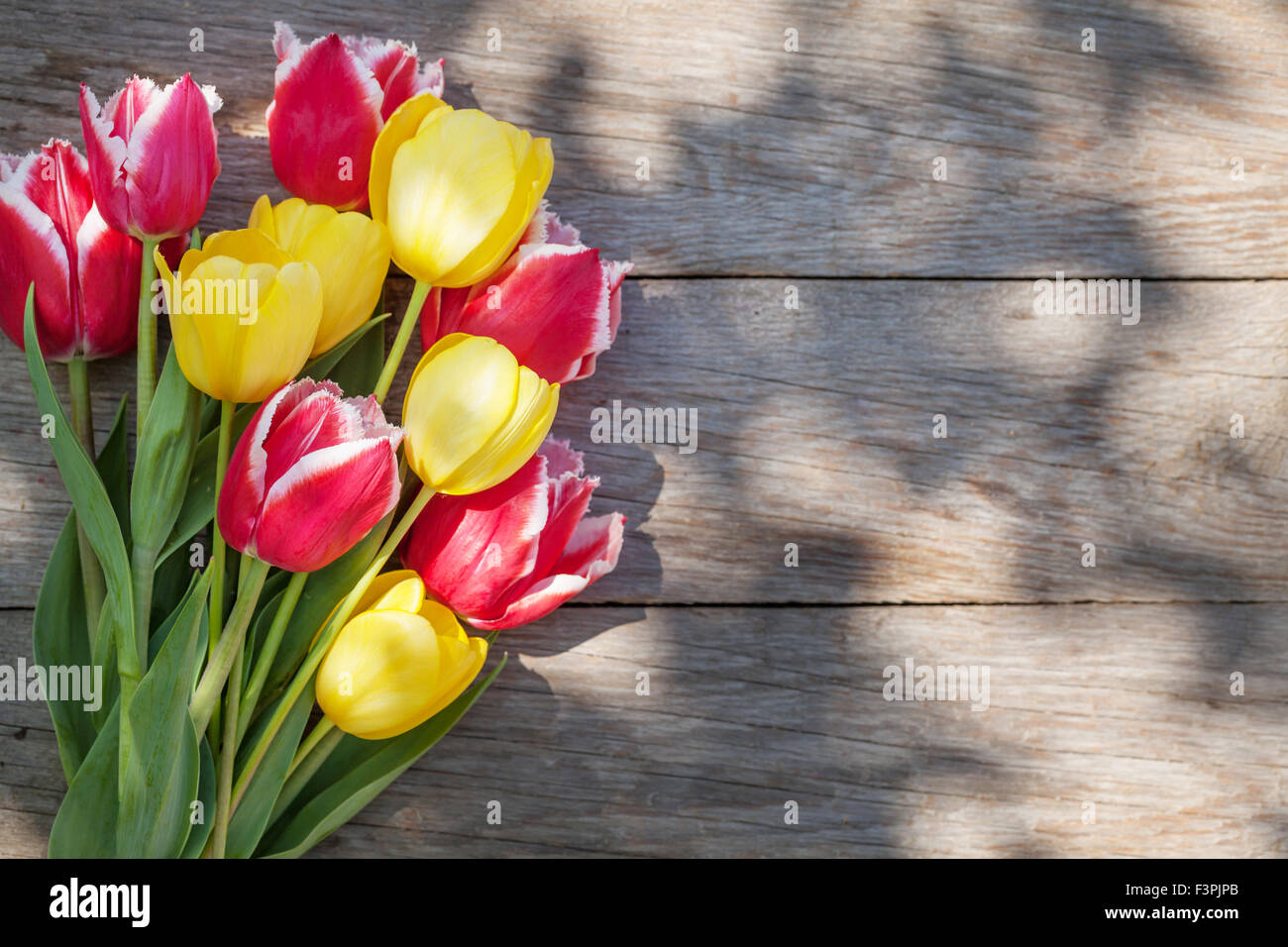 Colorful tulips on sunny garden table. Top view with copy space Stock Photo