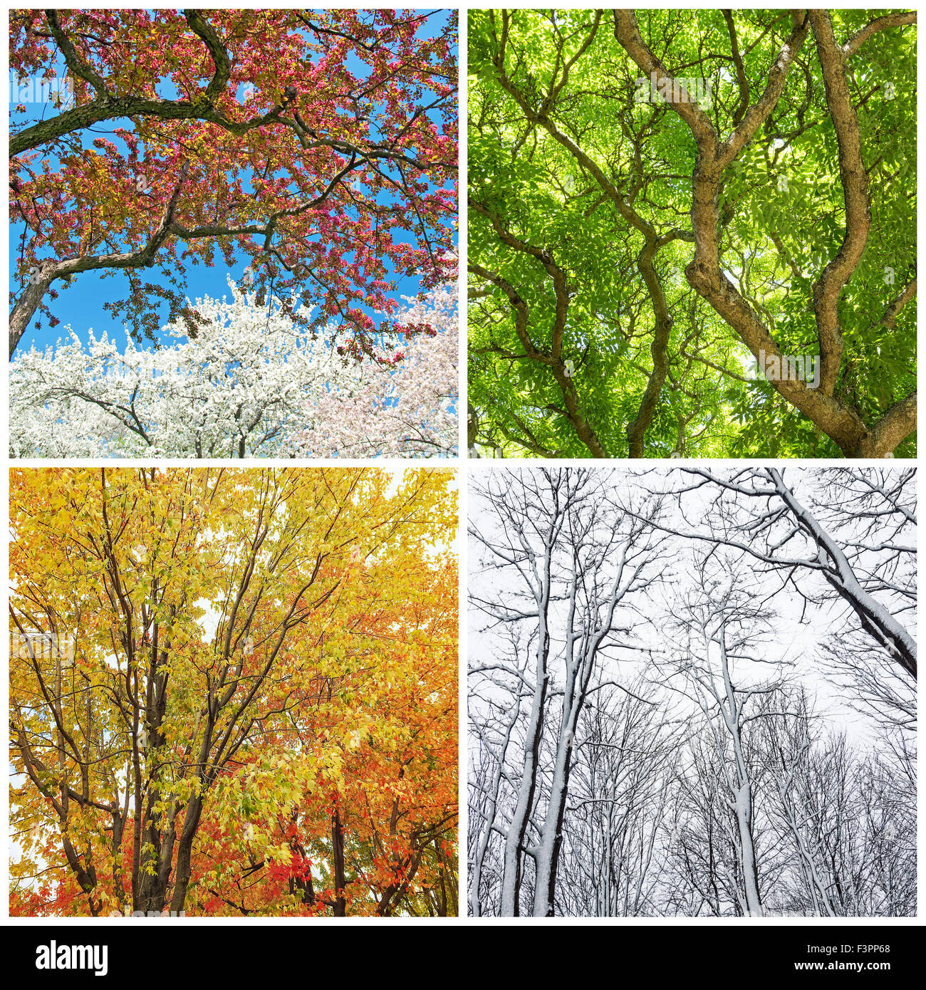 Four seasons. Trees in spring, summer, autumn and winter. Collage of 4 photos. - Stock Image
