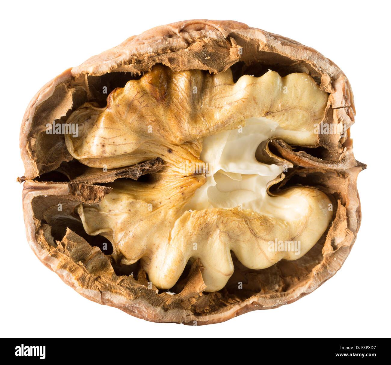 walnut nucleus isolated on the white background. - Stock Image