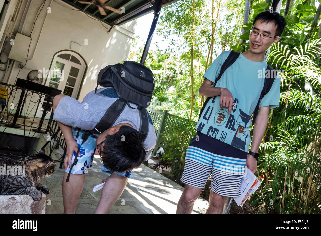 Florida Key West Keys Whitehead Street The Ernest Hemingway Home and Museum Asian man six 6-toed cat looking Stock Photo