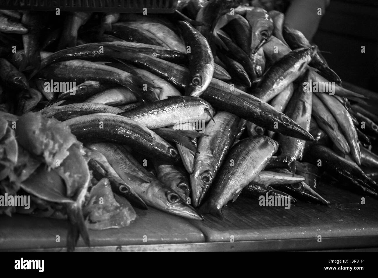 Fish - Stock Image