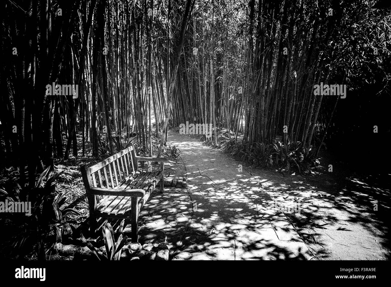A bench amongst a forest of bamboo on the grounds of the Huntington Library, San Marino, California, U.S.A. - Stock Image