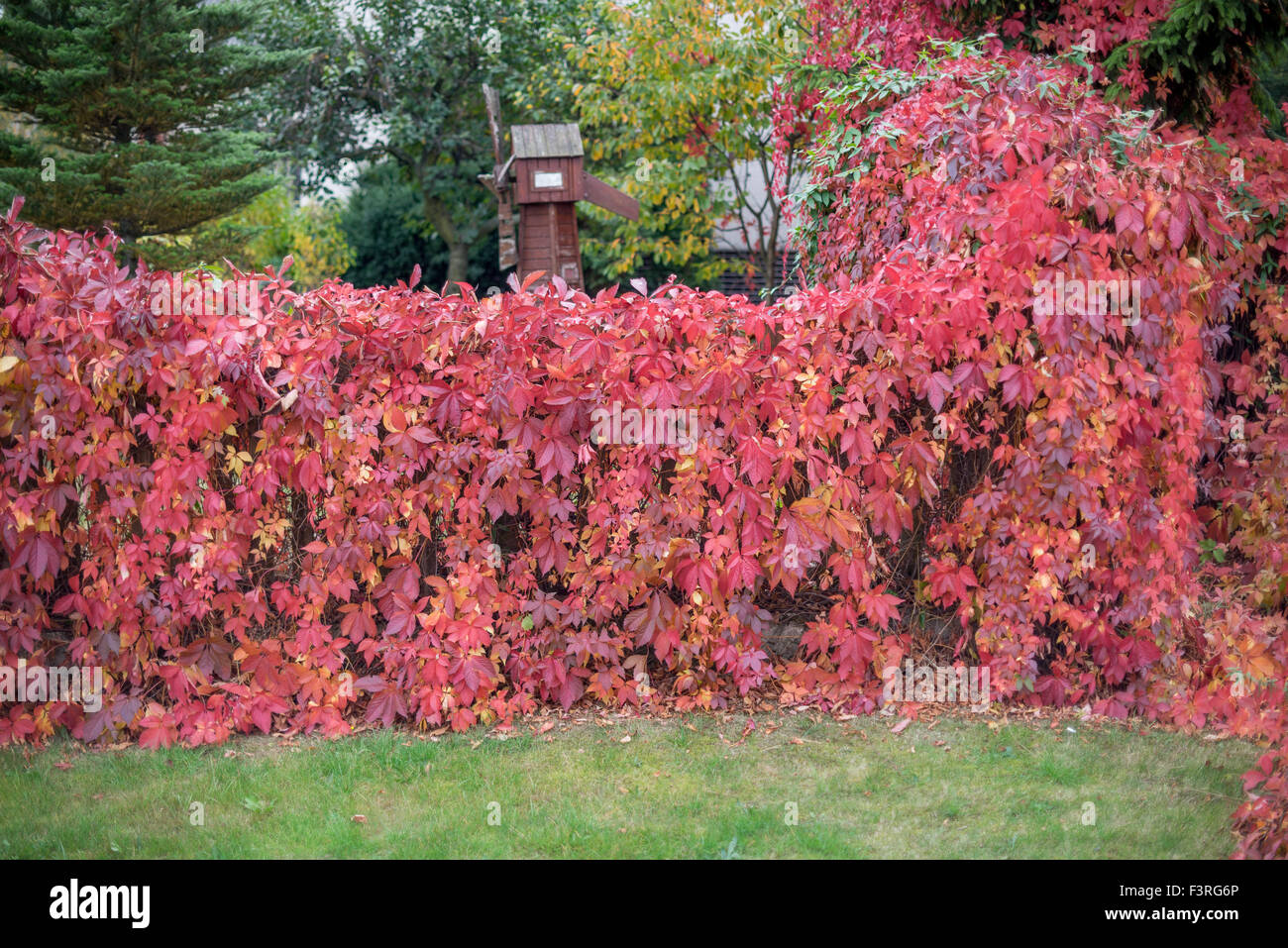 fence-covered-with-red-autumn-virginia-c