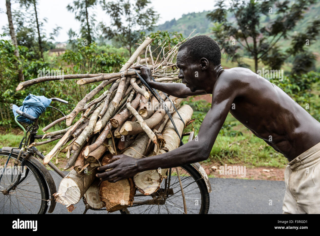 Man pushing bicycle with firewood, Burundi, Africa - Stock Image