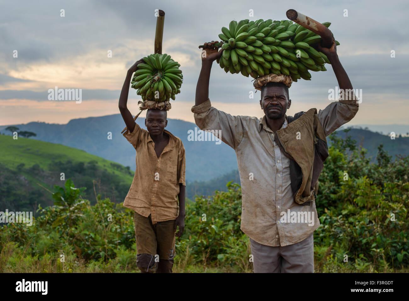 Banana pickers, Burundi, Africa - Stock Image