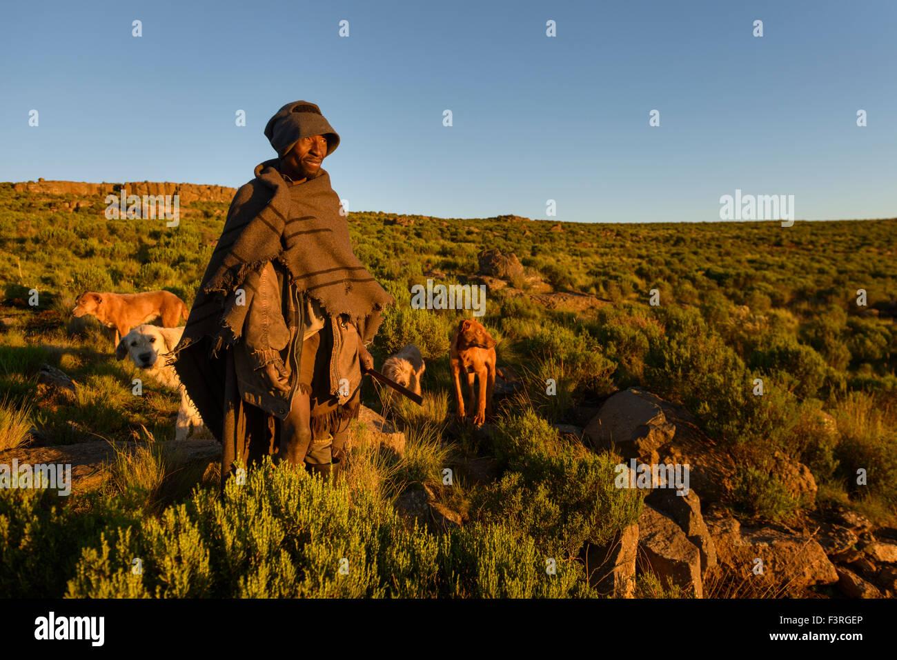 Basotho shepherd, Lesotho, Africa - Stock Image