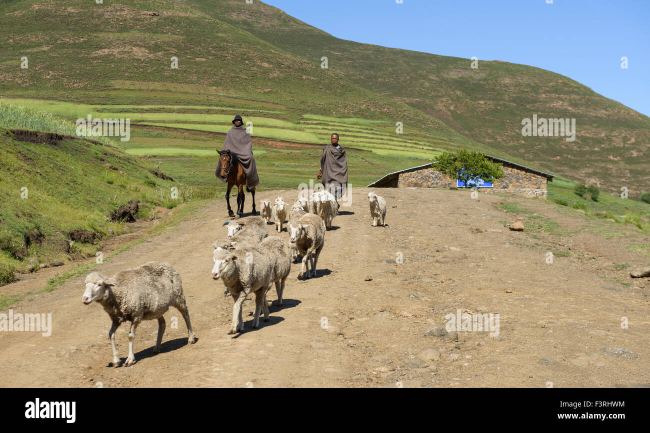 Shepherds in the province of KwaZulu Natal, South Africa - Stock Image