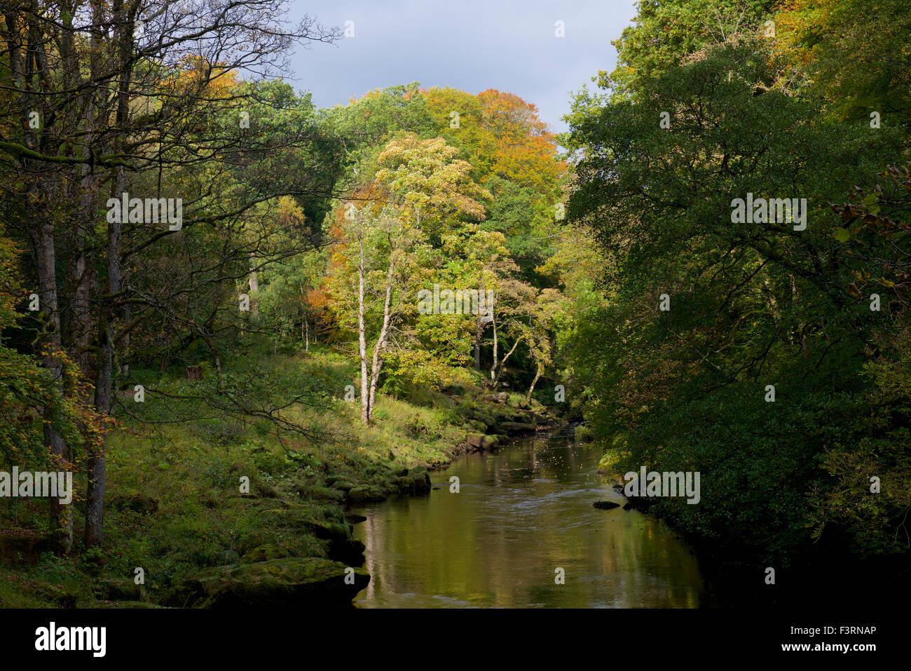 River Wharfe and Bolton Wood, Wharfedale, North Yorkshire, England UK - Stock Image