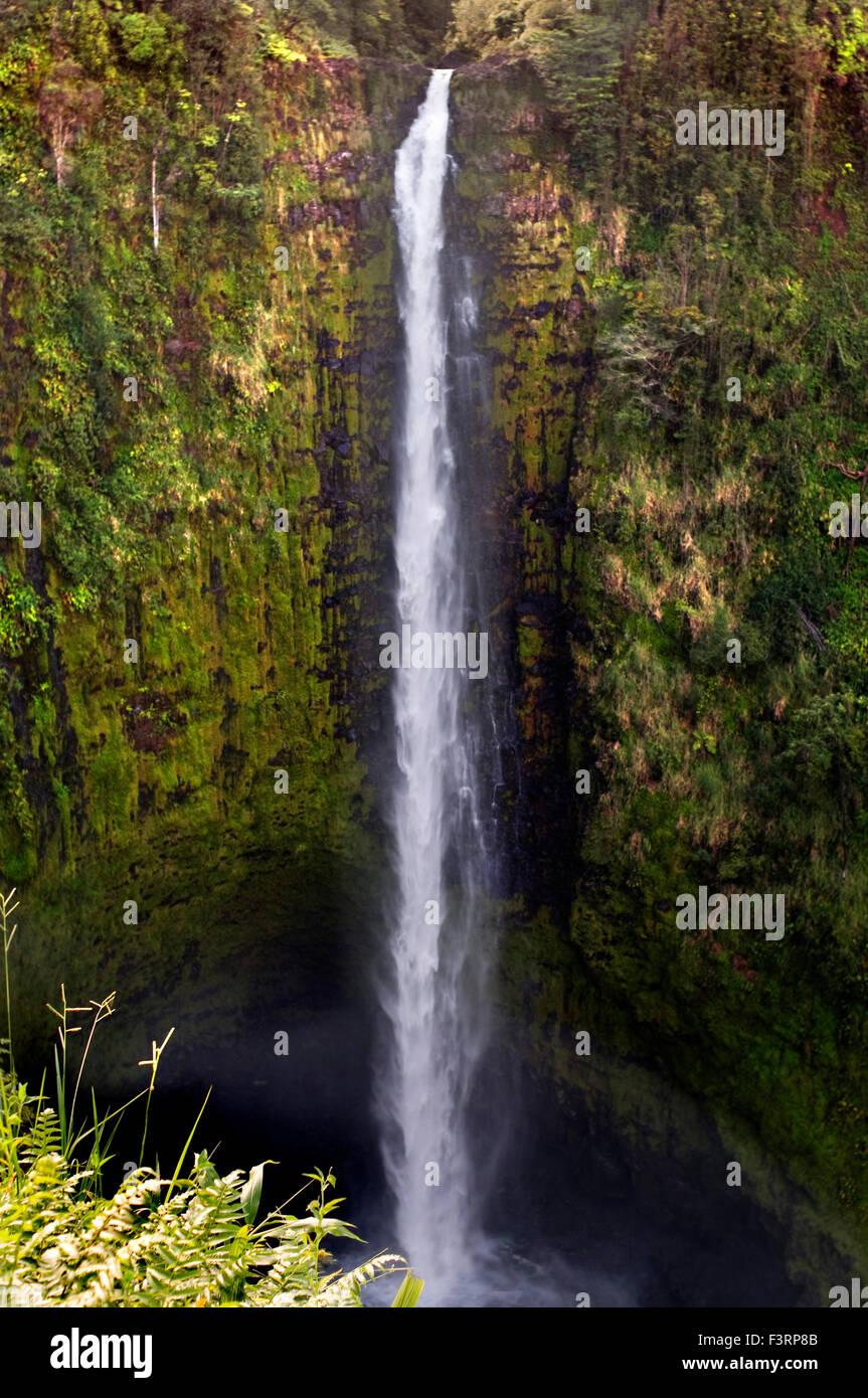 Akaka waterfall at Akaka Falls State Park. Big Island. Hawaii. At Akaka Falls State Park, located along the northeastern - Stock Image