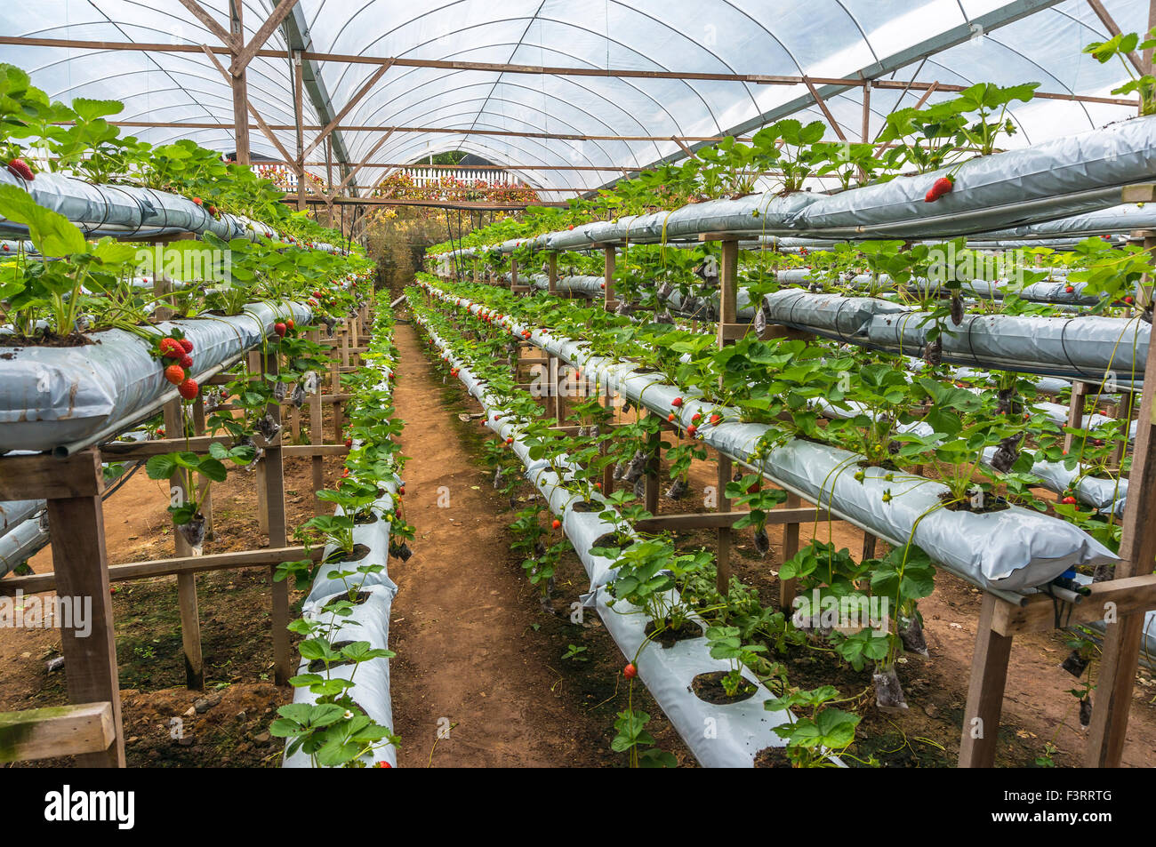 Hydroponic Farm Stock Photos Amp Hydroponic Farm Stock