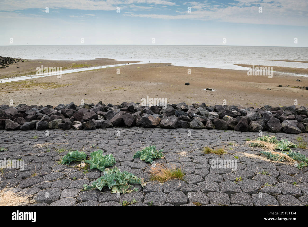 3 July, 2014  Shore of the Wadden Sea with rising water level.  Photo Kees Metselaar - Stock Image