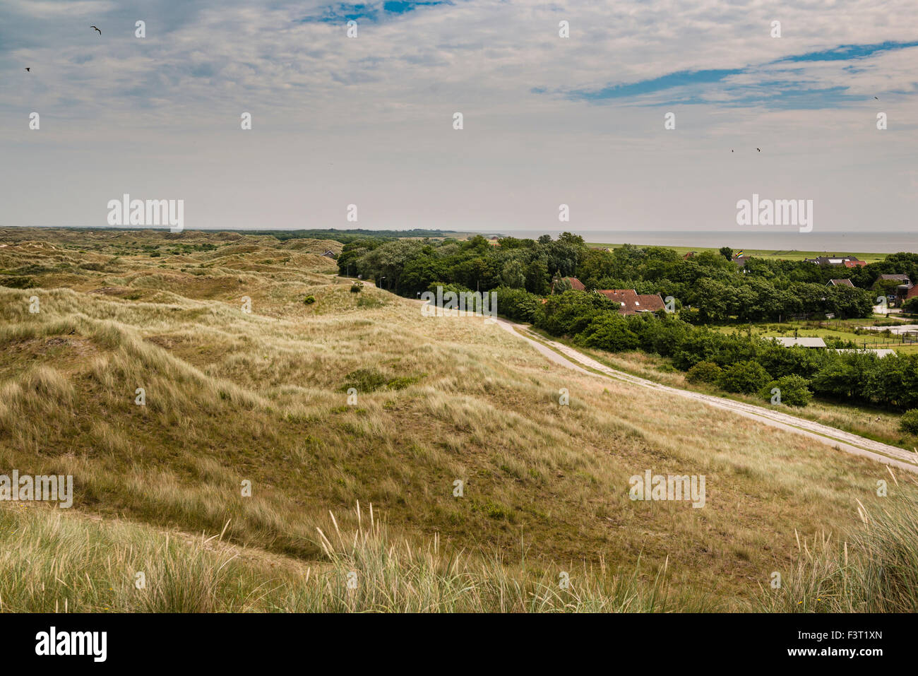 3 July, 2014  From the flat polder landscape into the dunes protecting from the North sea. The two main landscapes - Stock Image